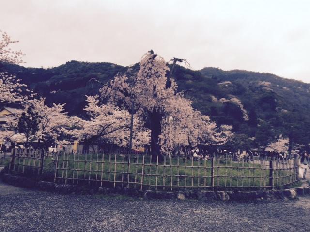 FullSizeRend嵐山3er